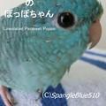 Photos: CIMG0863 ぽっぽ 1500×2000 表紙7