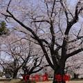 Photos: 光景sight #13