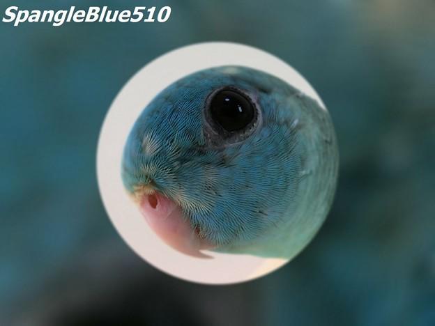CIMG3127 ぽっぽ 1024×768 SpangleBlue510