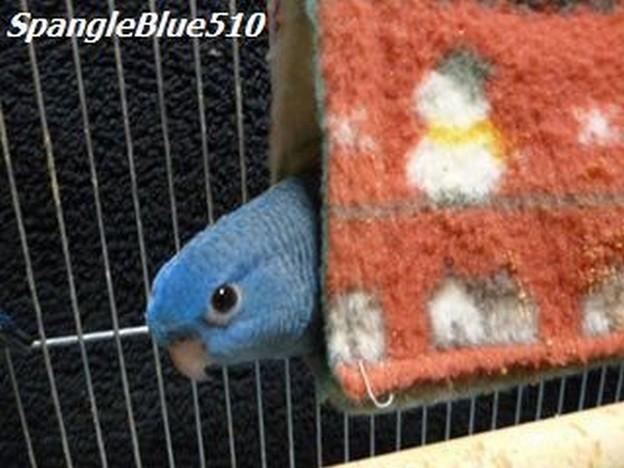 幸福の青い鳥~~~♪ 3兄弟姉妹 なすび 1024×768