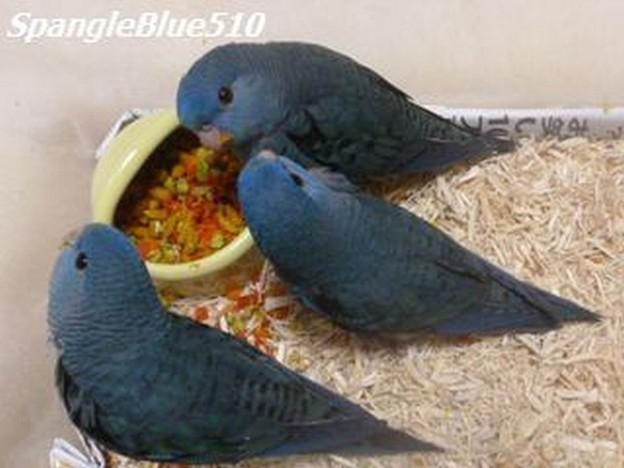 幸福の青い鳥~~~♪ 3兄弟姉妹 ふじ・たか・なすび2 1024×768