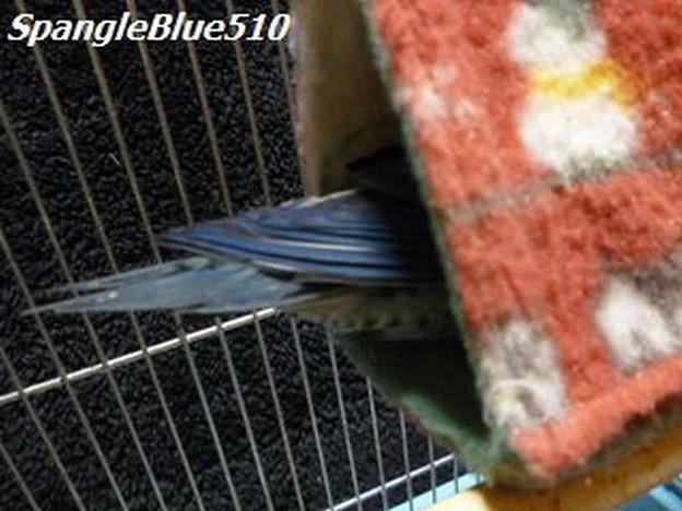 幸福の青い鳥~~~♪ 頭隠して尻隠さず 1024×768