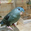 CIMG1868 ぽっぽ 1024×768 色調補正 SpangleBlue510