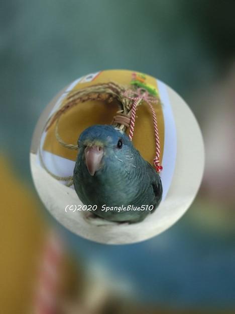Photos: CIMG2629 1024×768 (C)2020 SpangleBlue510