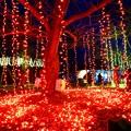 写真: 大阪光之饗宴-萬博park-6