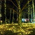 写真: 大阪光之饗宴-萬博park-7