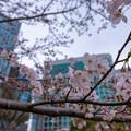 Photos: 浜離宮恩賜庭園