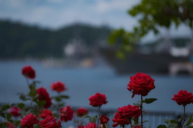 ヴェルニー公園 薔薇