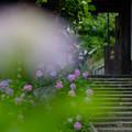 Photos: 岩殿寺(逗子市)
