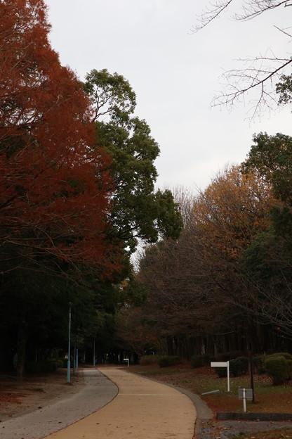 公園のランニングロード