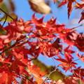 Photos: 赤と青