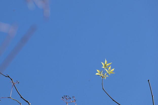 青空に新芽