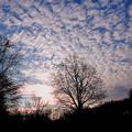 Photos: 林からの朝日