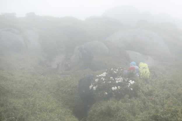 日本の山 ゆっくり登山 宮之浦岳 ヤクシカと共に歩きました