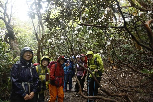 日本の山 ゆっくり登山 宮之浦岳 ヤクシマシャクナゲに会えました