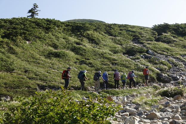 日本の山 山の天気講座 薬師岳 チングルマの実がきれい、薬師平へ
