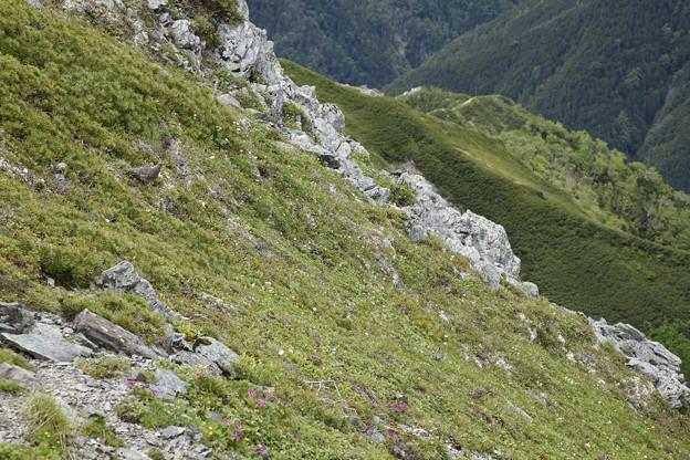 日本の山 間ノ岳、北岳3日間 ライチョウにも会えました