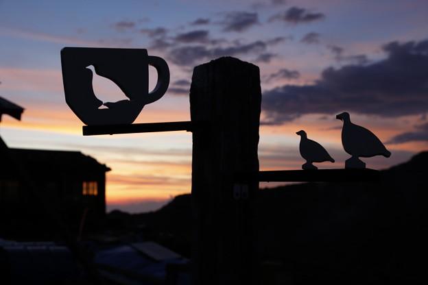 日本の山 次晴登山部 御嶽山 夕焼けを見つめるライチョウ