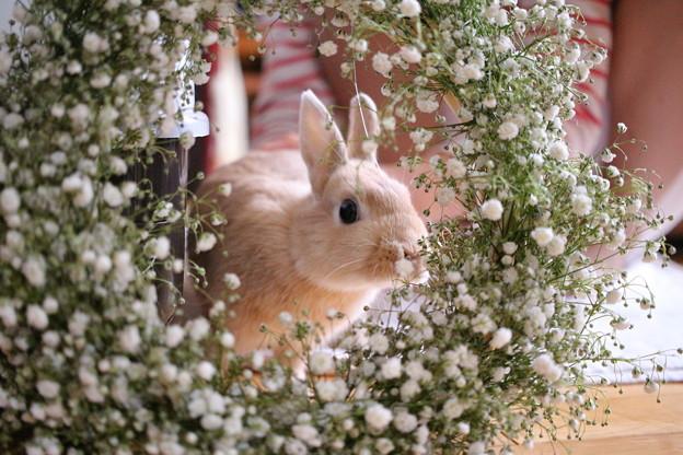 202792-ぷりんちゃん「春の香りがするね~?」