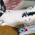 203155-ピースケちゃん「ママが作ったうさ人形と。」