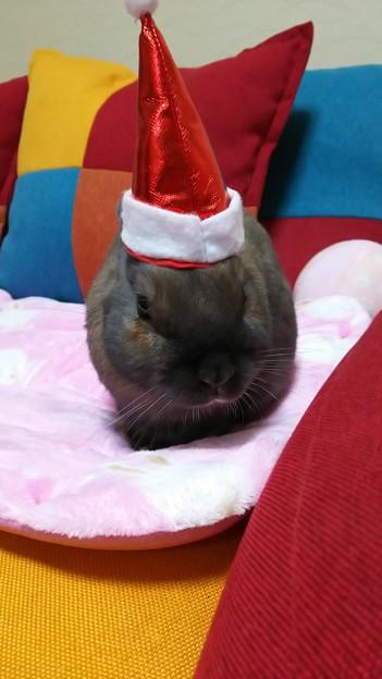 203224-マロンちゃん「クリスマスだからね。」