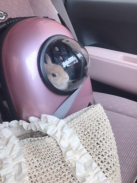 シートベルト付けよう!
