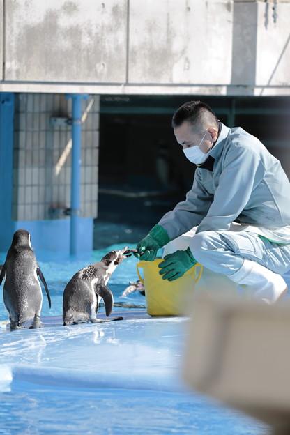 王子動物園29