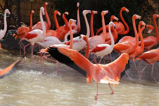 王子動物園22