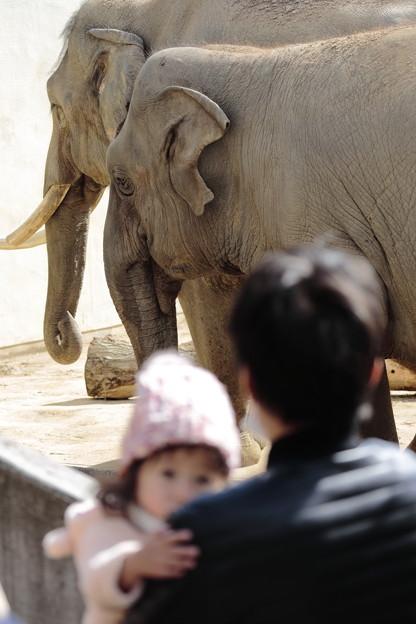 王子動物園21