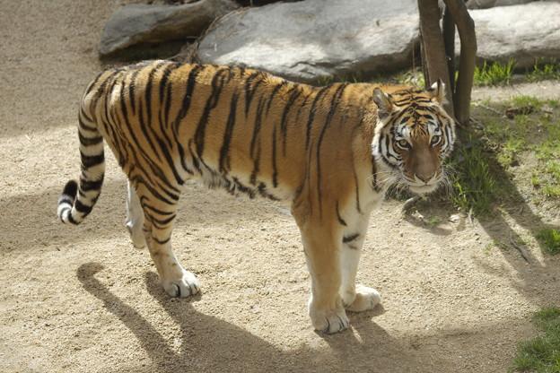 王子動物園20