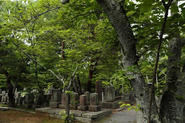 京都5月29