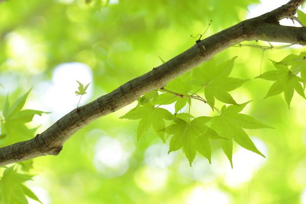 大阪市立大学理学部附属植物園09