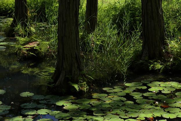 大阪市立大学理学部附属植物園08