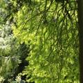 写真: 大阪市立大学理学部附属植物園02