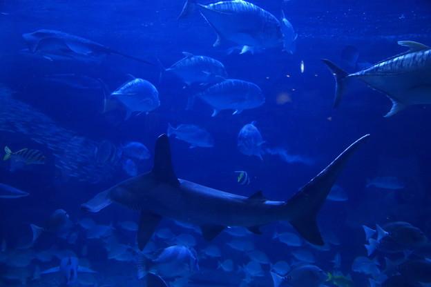 神戸市立須磨海浜水族園17