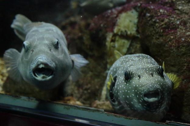 Photos: 神戸市立須磨海浜水族園10