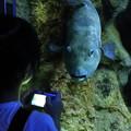 Photos: 神戸市立須磨海浜水族園28