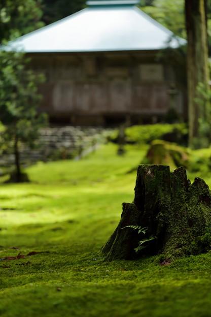 福井・平泉寺白山神社14