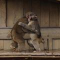 Photos: 嵐山モンキーパーク14