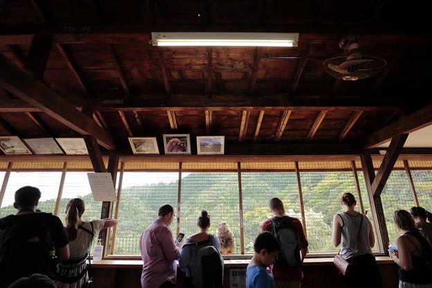Photos: 嵐山モンキーパーク06