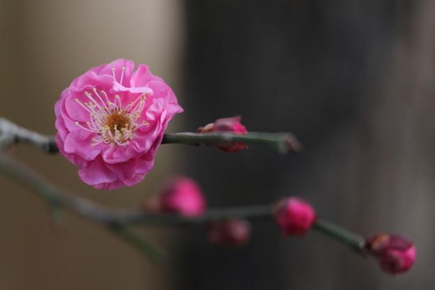千里川10