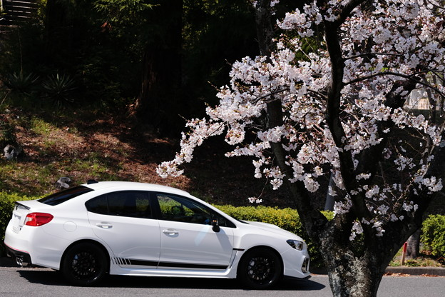 RA-Rと桜03