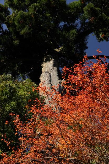 比叡山延暦寺17
