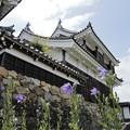 Photos: 福知山城16