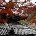 京都・西山 善峯寺05