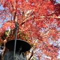 京都・西山 善峯寺25