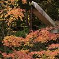 京都・西山 善峯寺19