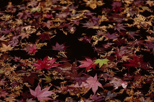 京都・西山 善峯寺16