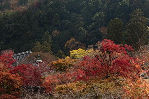 京都・西山 善峯寺15