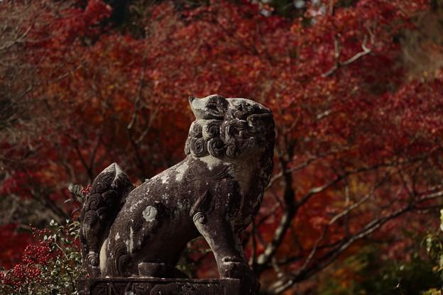 京都・西山 善峯寺11